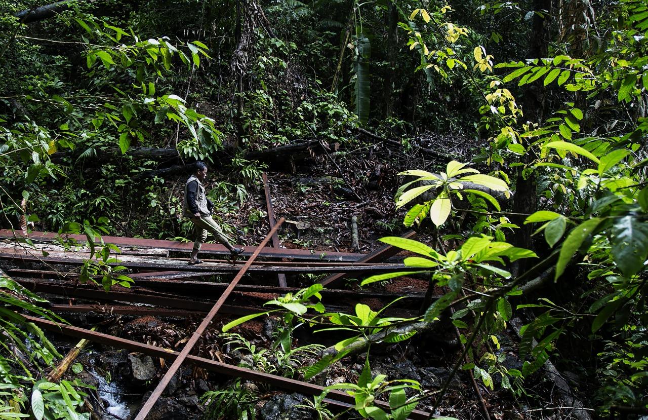 Defensor anda em cima de madeira extraída ilegalmente, nas Filipinas