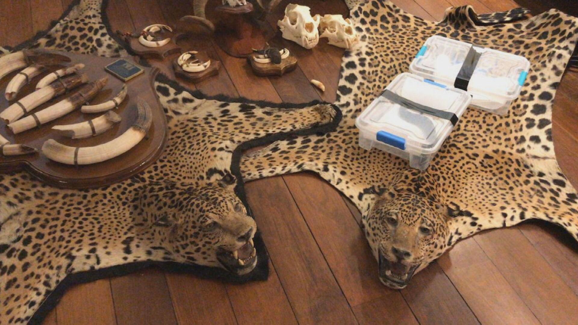 PF investiga tráfico internacional de animais em cinco estados