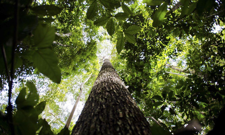 vegetação da floresta amazônica