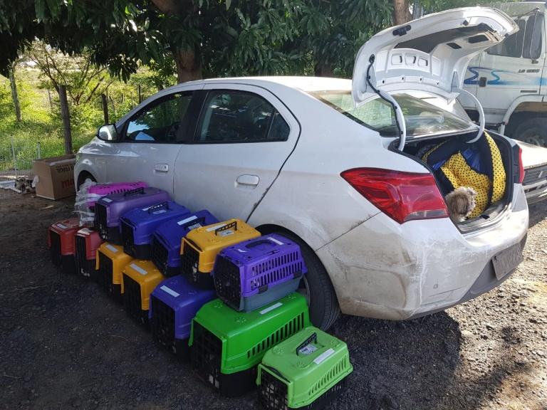 Caixas com filhotes de shih tzu encontrados pela PRF na Bahia