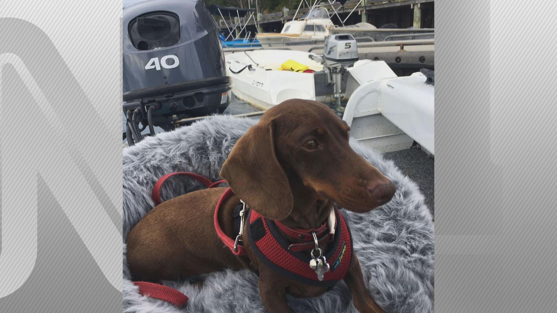 Pip, o cachorro que ficou separado dos donos por seis meses após restrições por