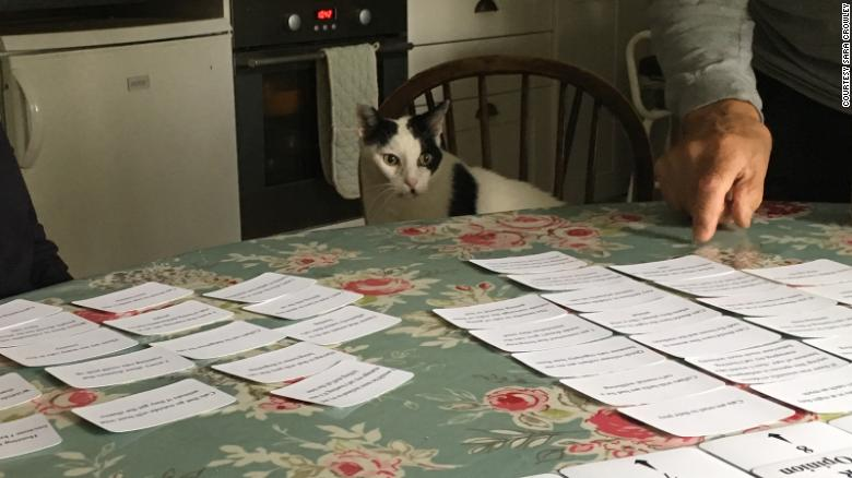 Gato em frente a cartelas