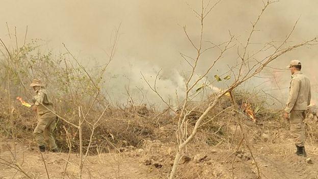 Bombeiro em meio à vegetação queimada