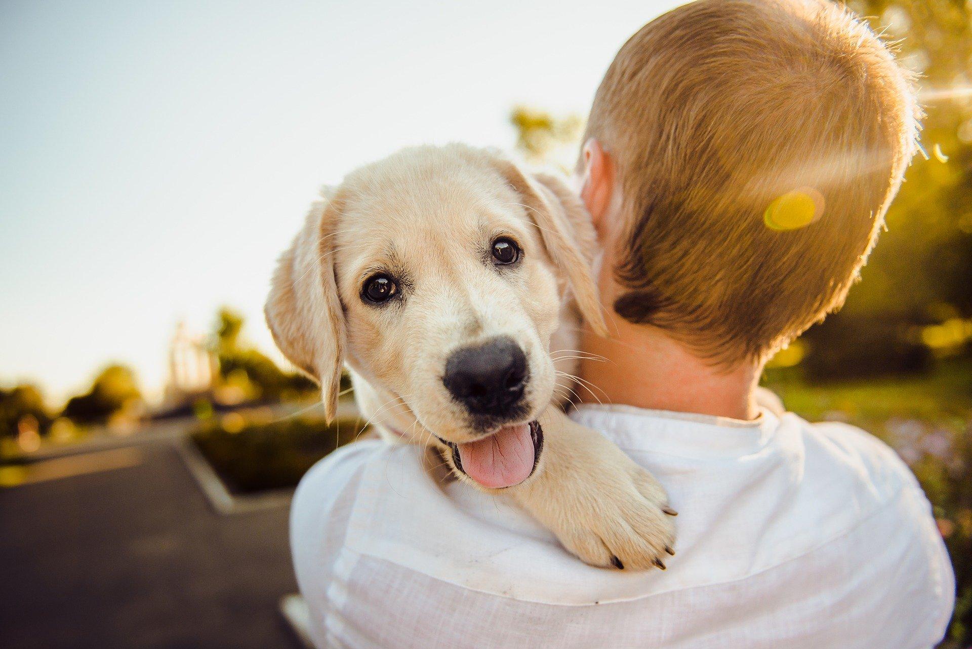 Cachorro abraçado pelo dono