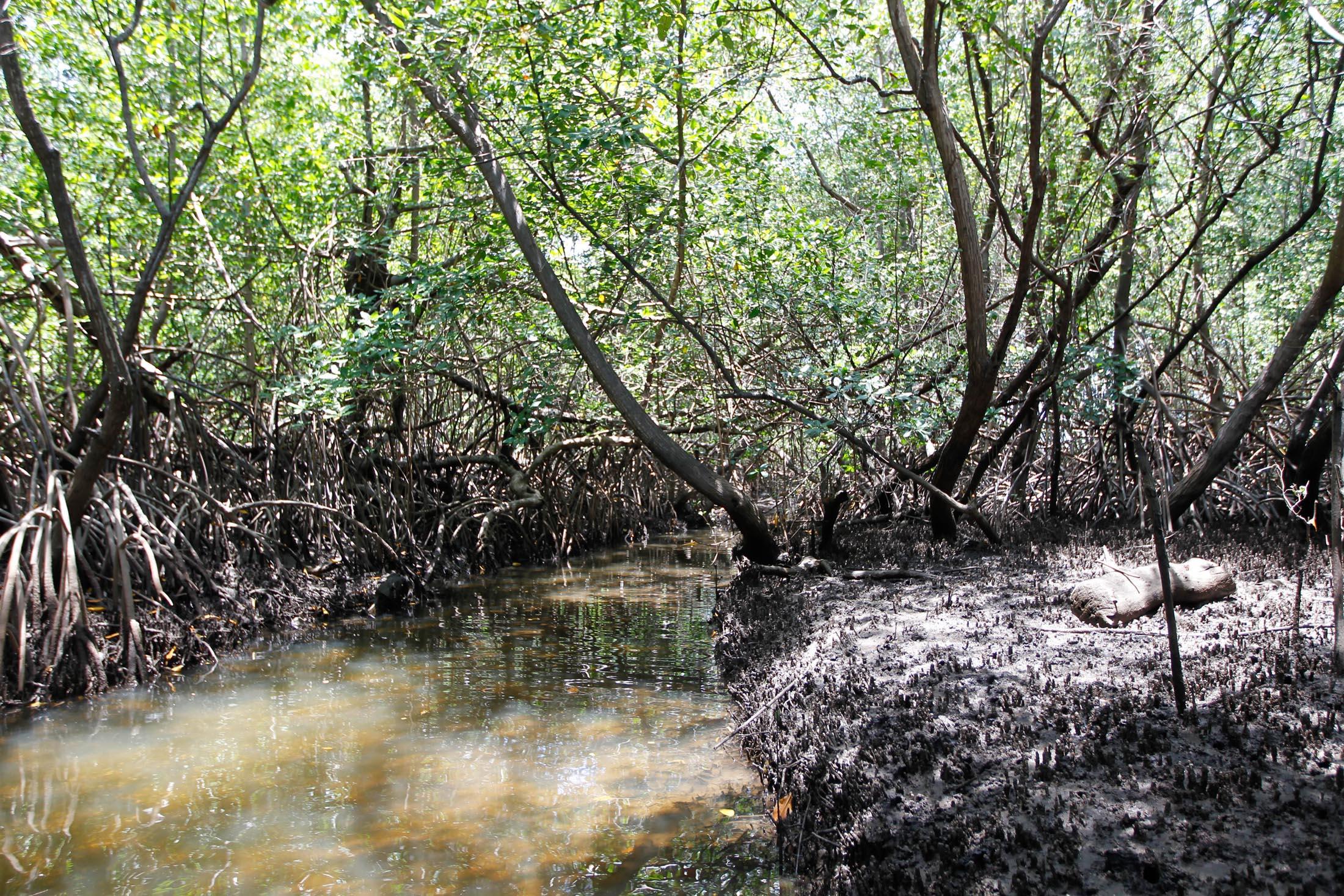 Área de manguezal às margens do rio Tatuamunha, no Recife (PE)