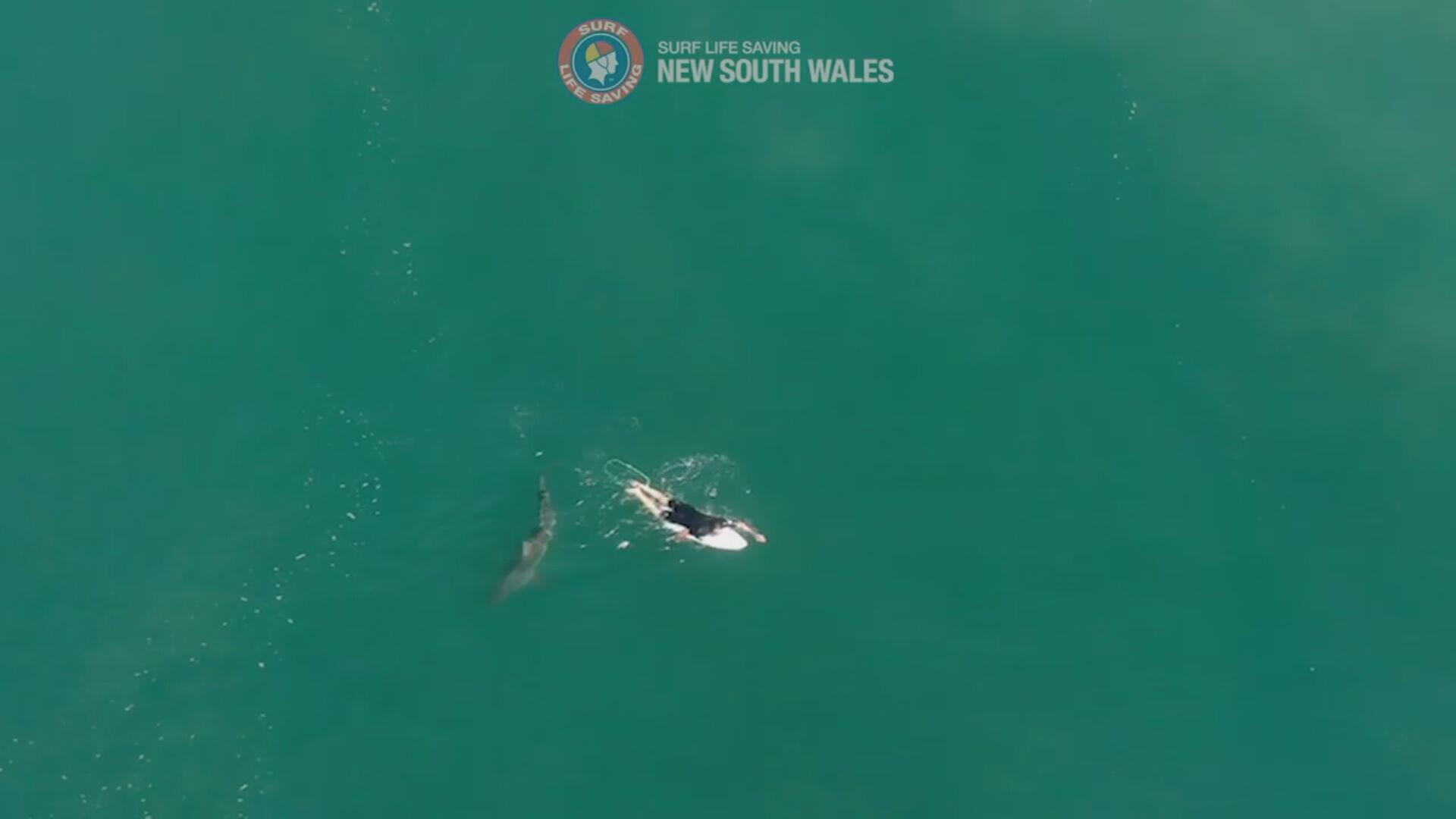 Drone flagra momento em que surfista nada perto de tubarão