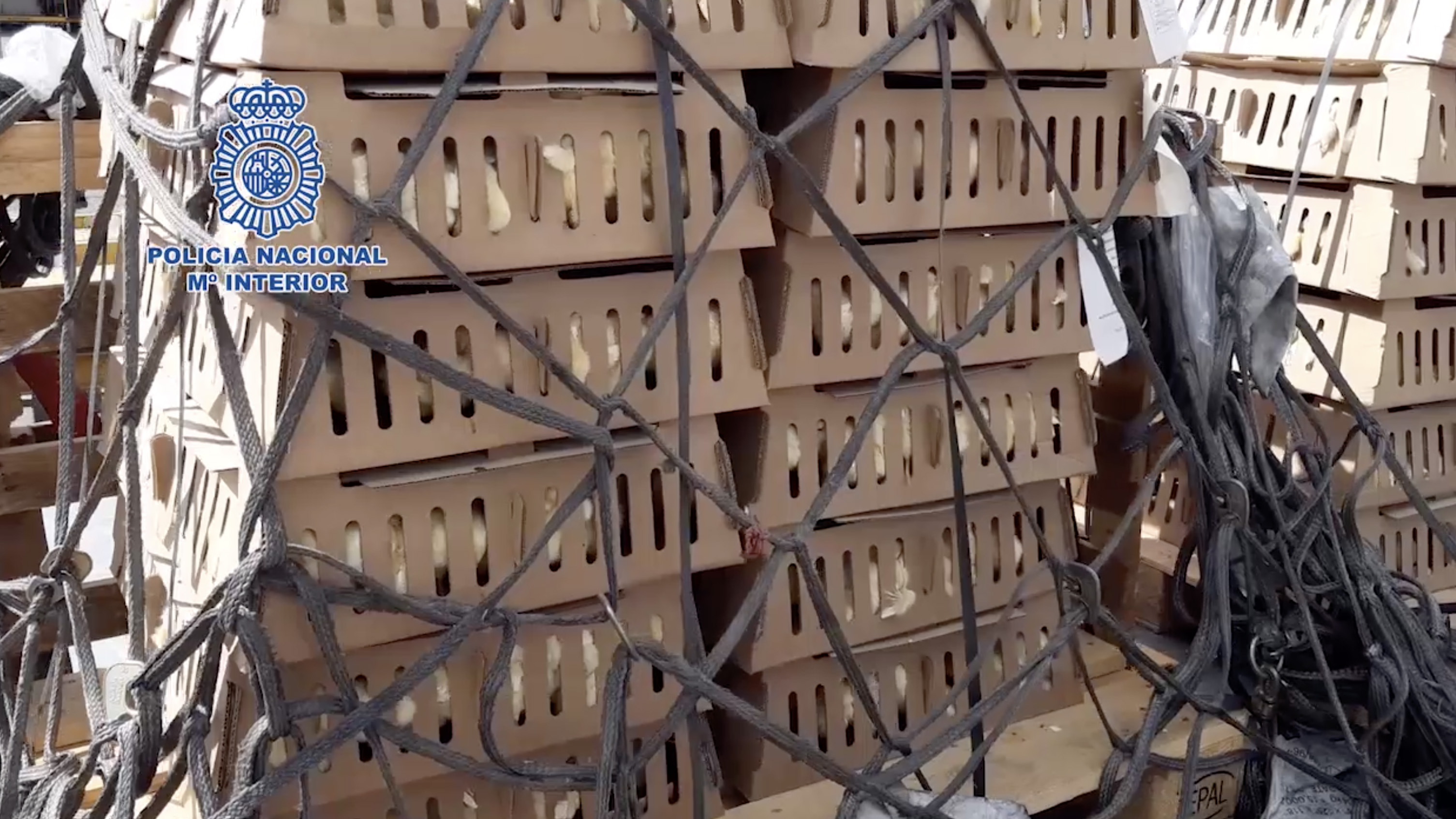 Caixas com pintinhos encontradas em aeroporto de Madri