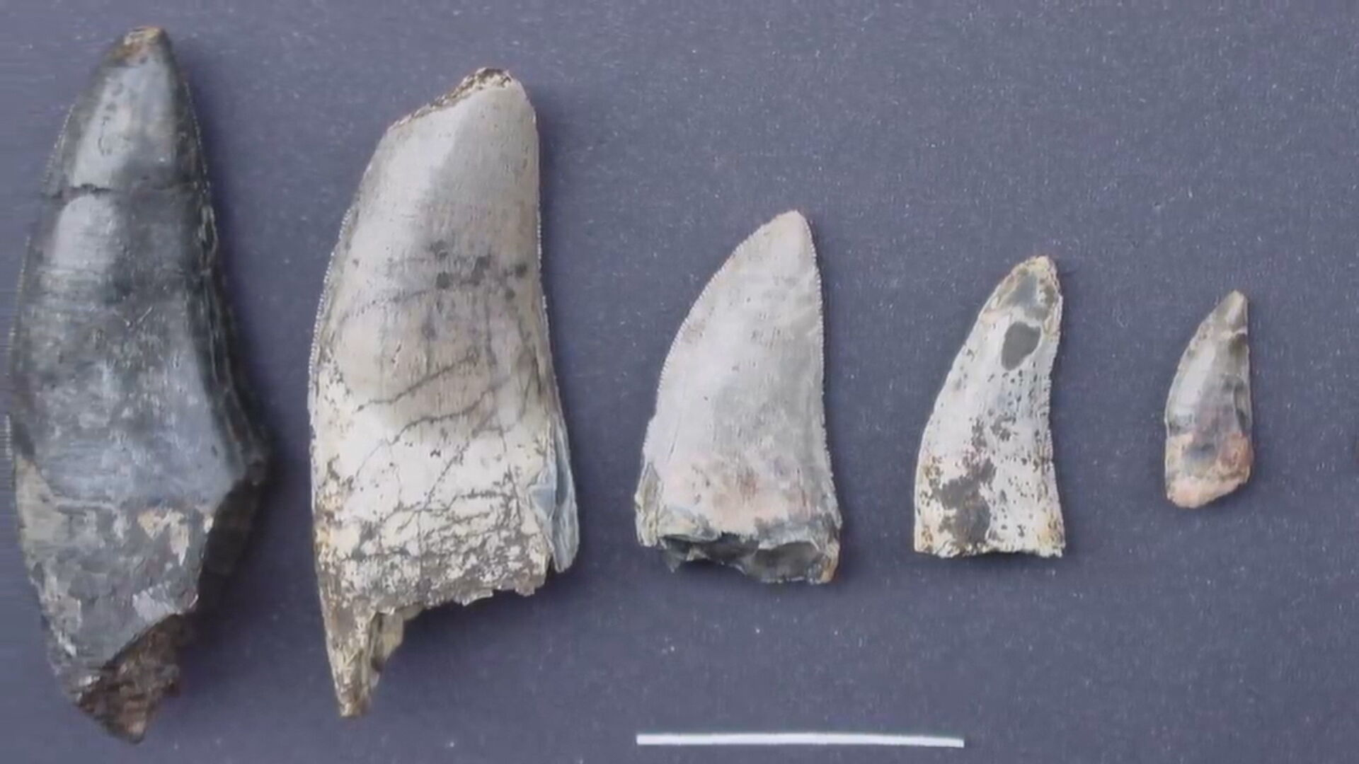 Fósseis encontrados por pesquisadores brasileiros