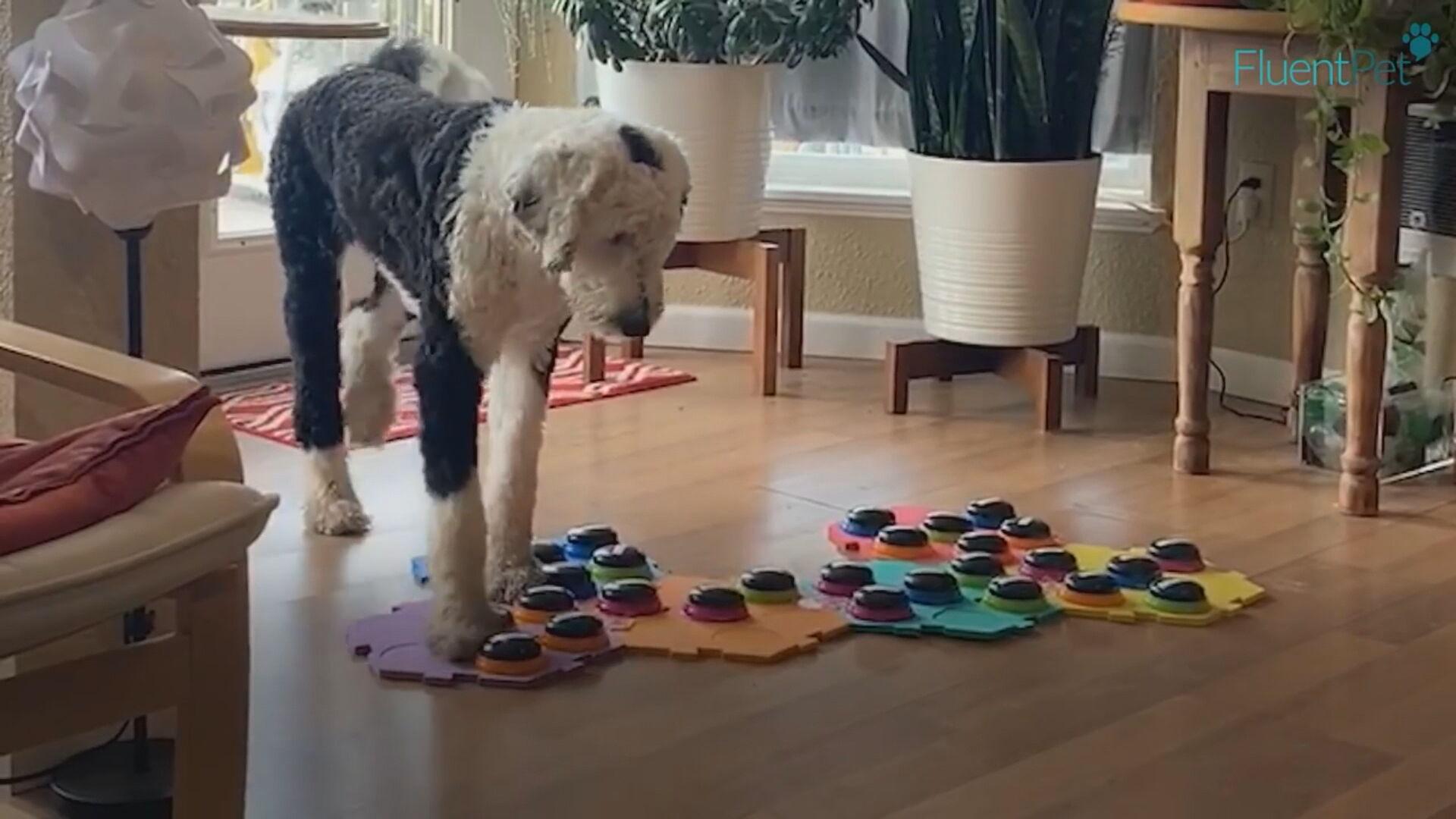 Plataforma ajuda cachorro a 'falar' com o dono