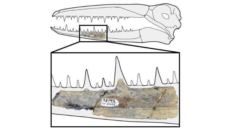 Fóssil maior ave da história