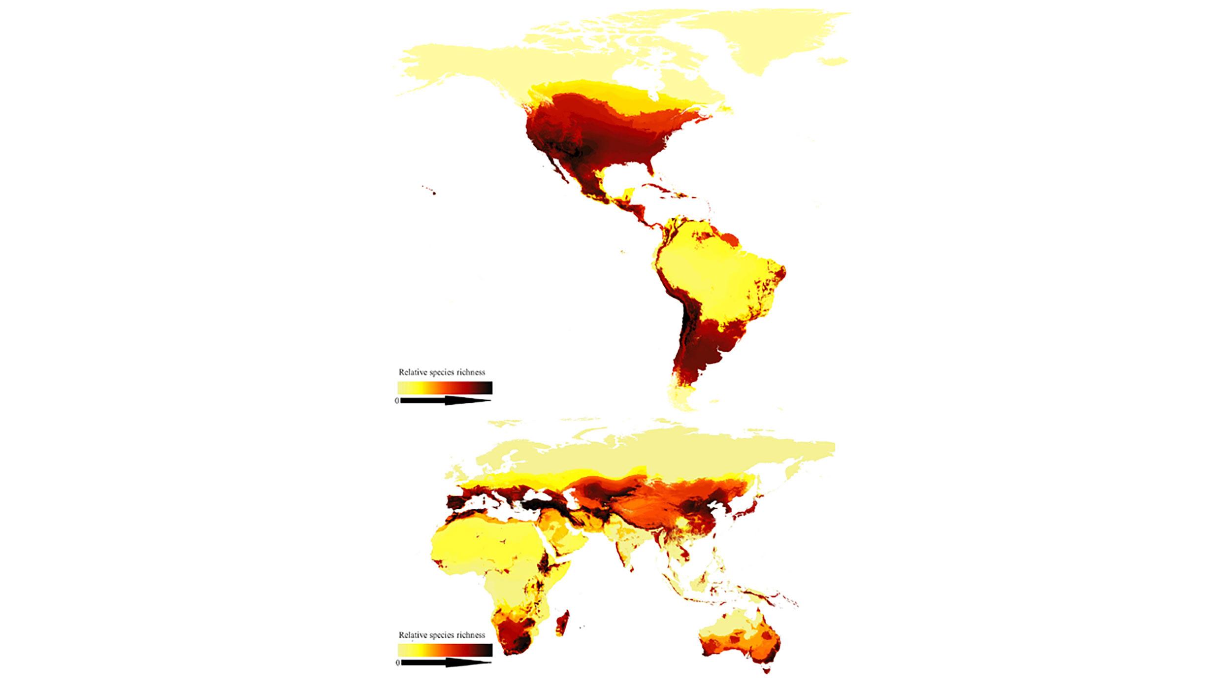 Pesquisadores criaram o primeiro mapa moderno global de espécies de abelhas
