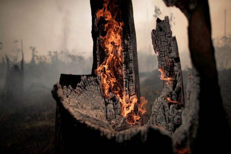 Árvores em chamas na Amazônia