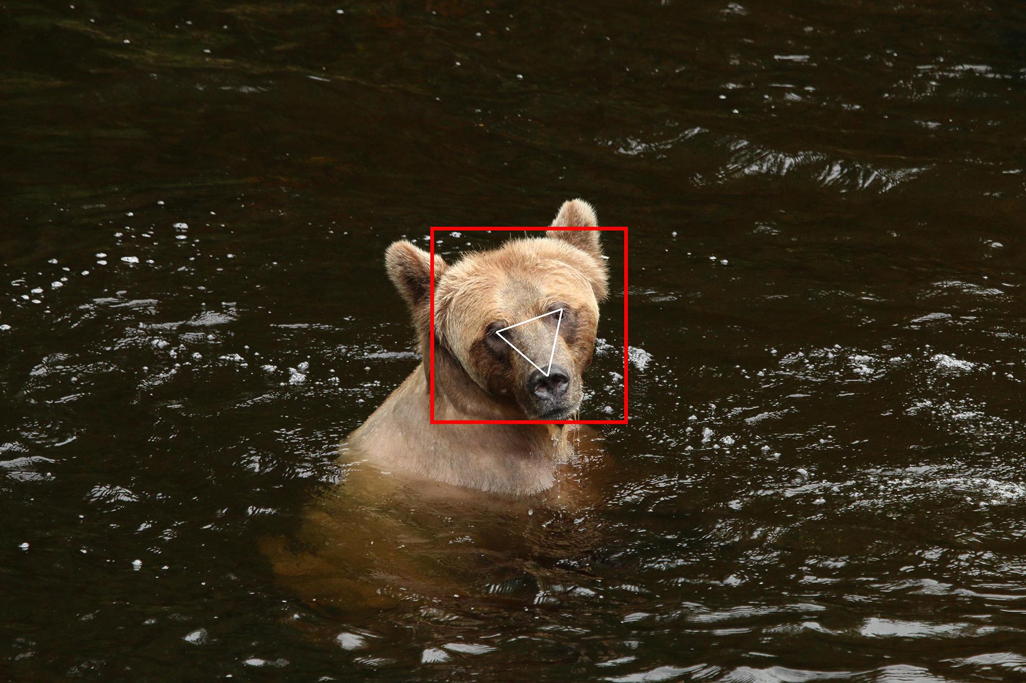 BearID identifica ursos em imagens