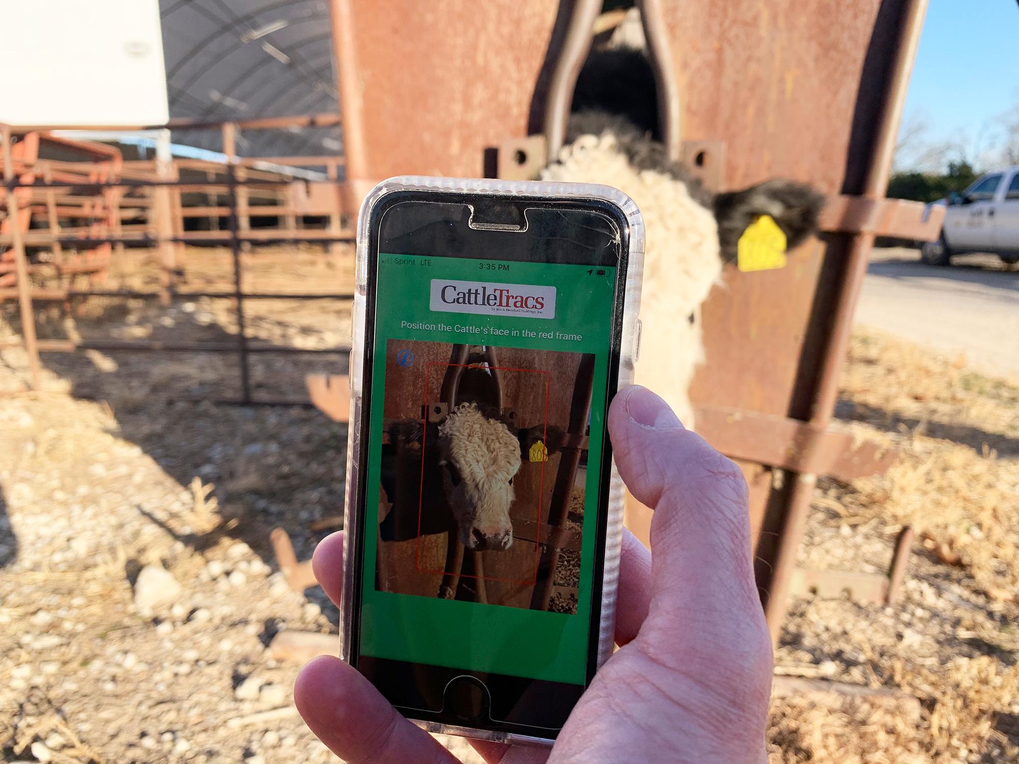 O aplicativo CattleTracs monitora o gado
