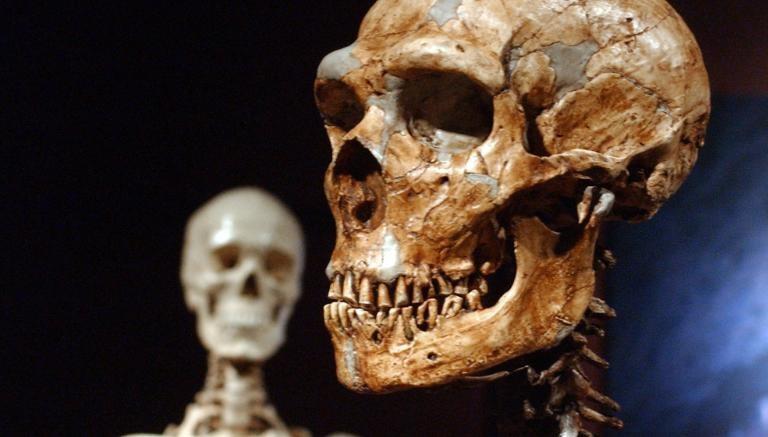 Crânio de Neandertal em comparação com o de ser humano atual