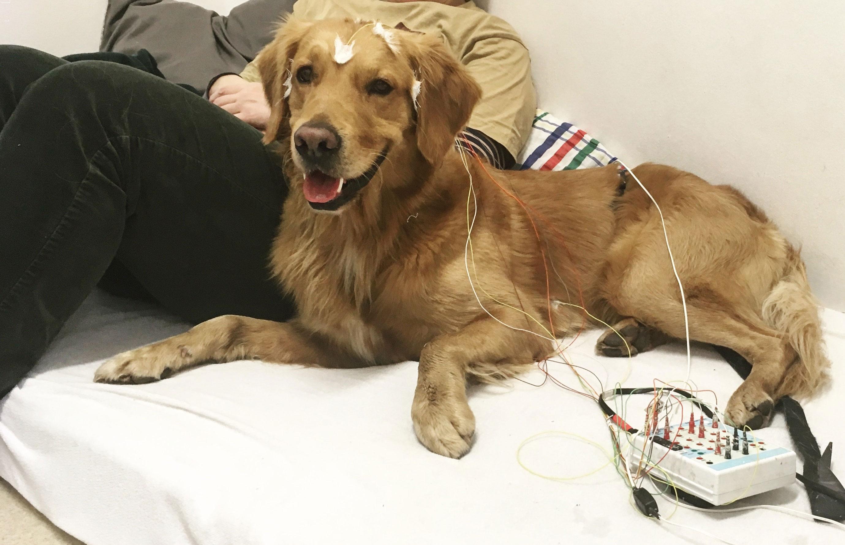 Os cães tinham eletrodos presos às cabeças.