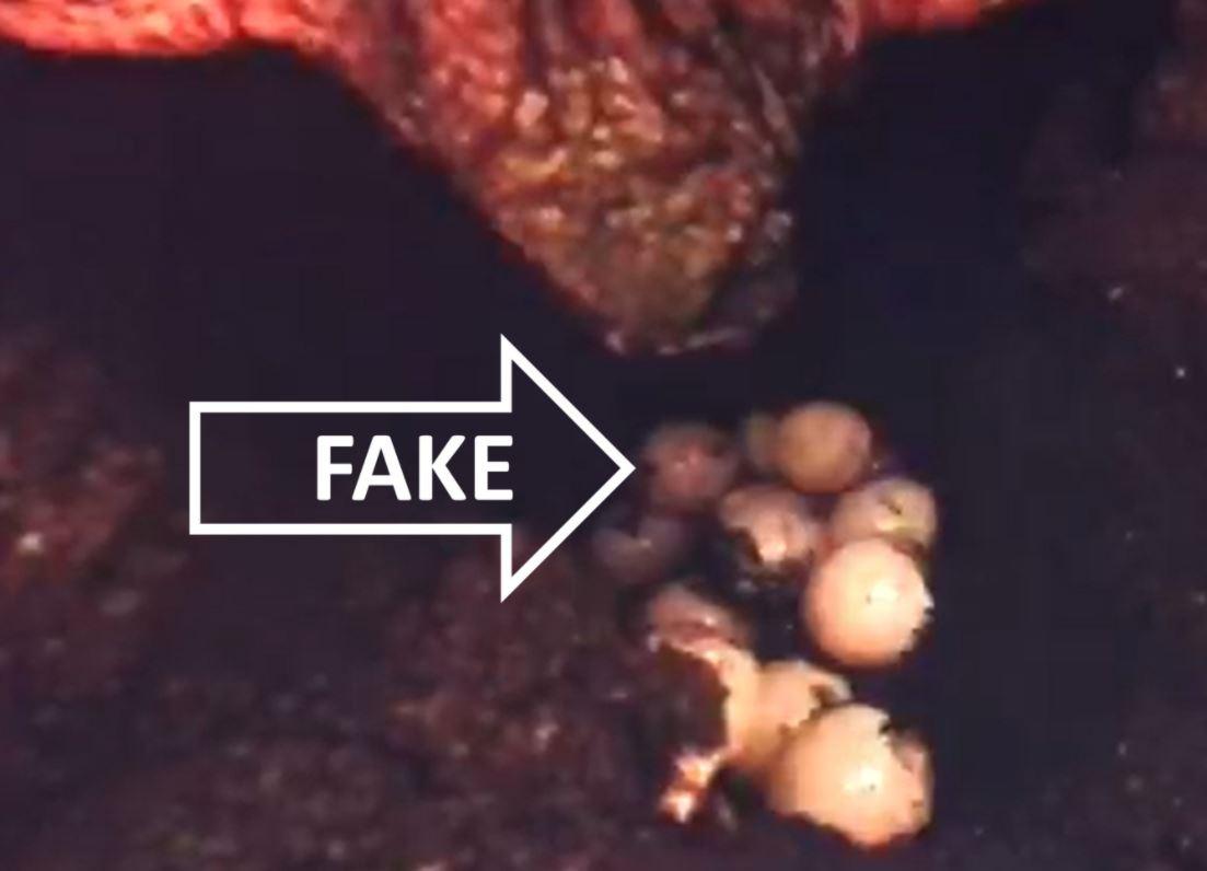 Ovos falsos são idênticos aos ovos comuns, roubados por caçadores