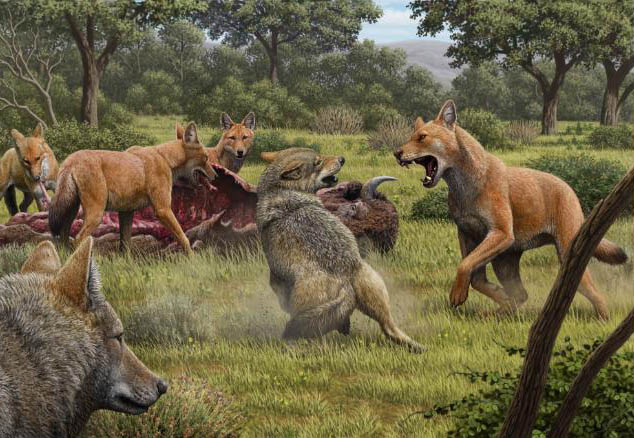 Lobos-terríveis