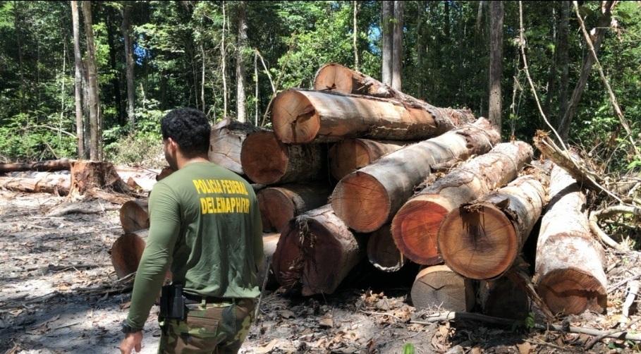 Imagens de um acampamento de desmatamento ilegal encontrado