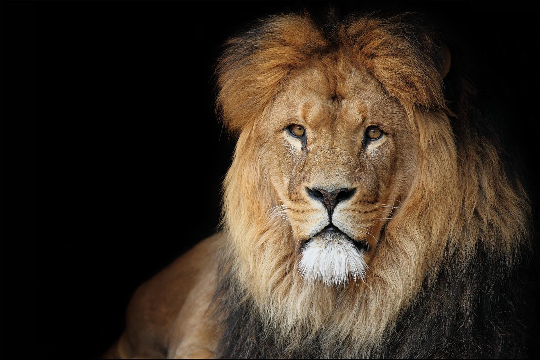 Leão, Imposto de Renda
