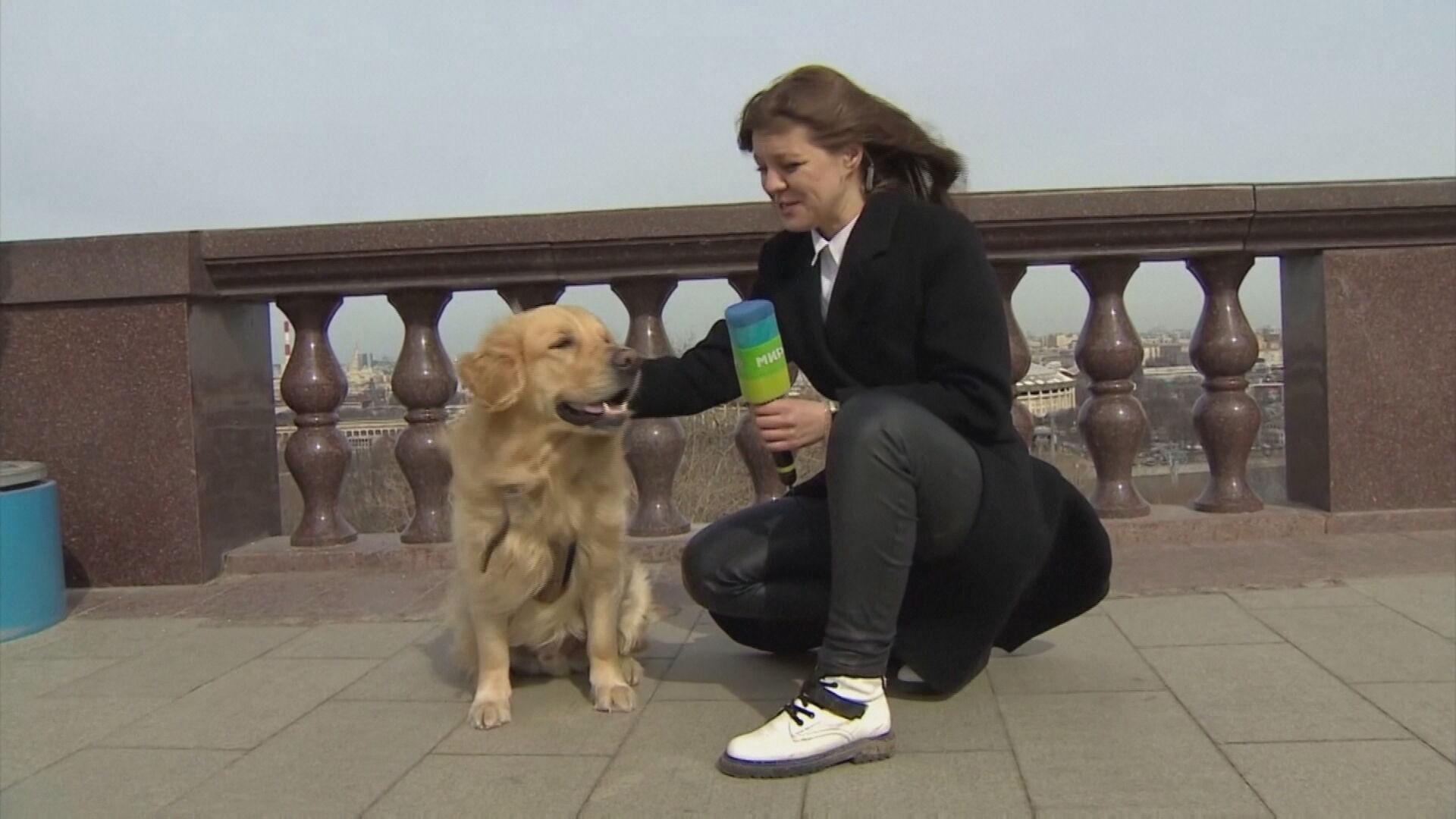 Após recuperar microfone, repórter decide 'entrevistar' cachorro brincalhão