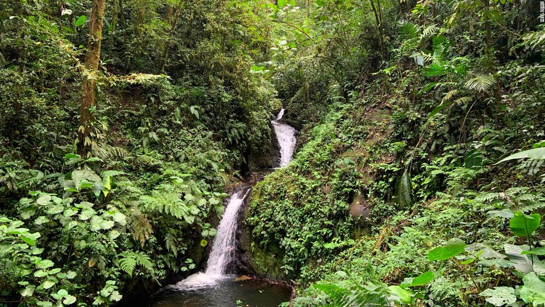 Florestas restauradas na Colômbia