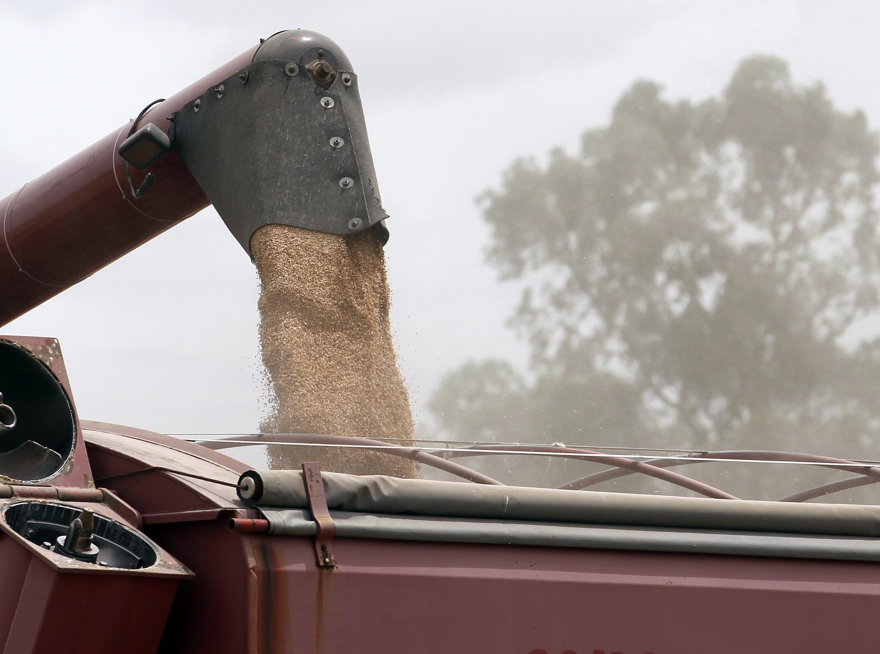 Foto produção trigo