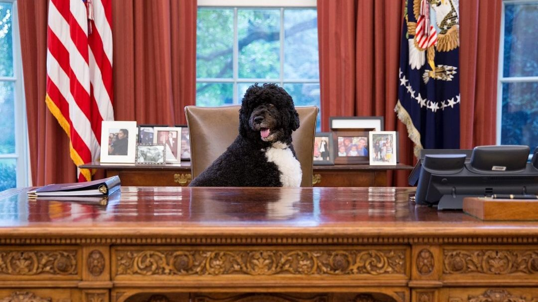 Bo, cachorro da família Obama