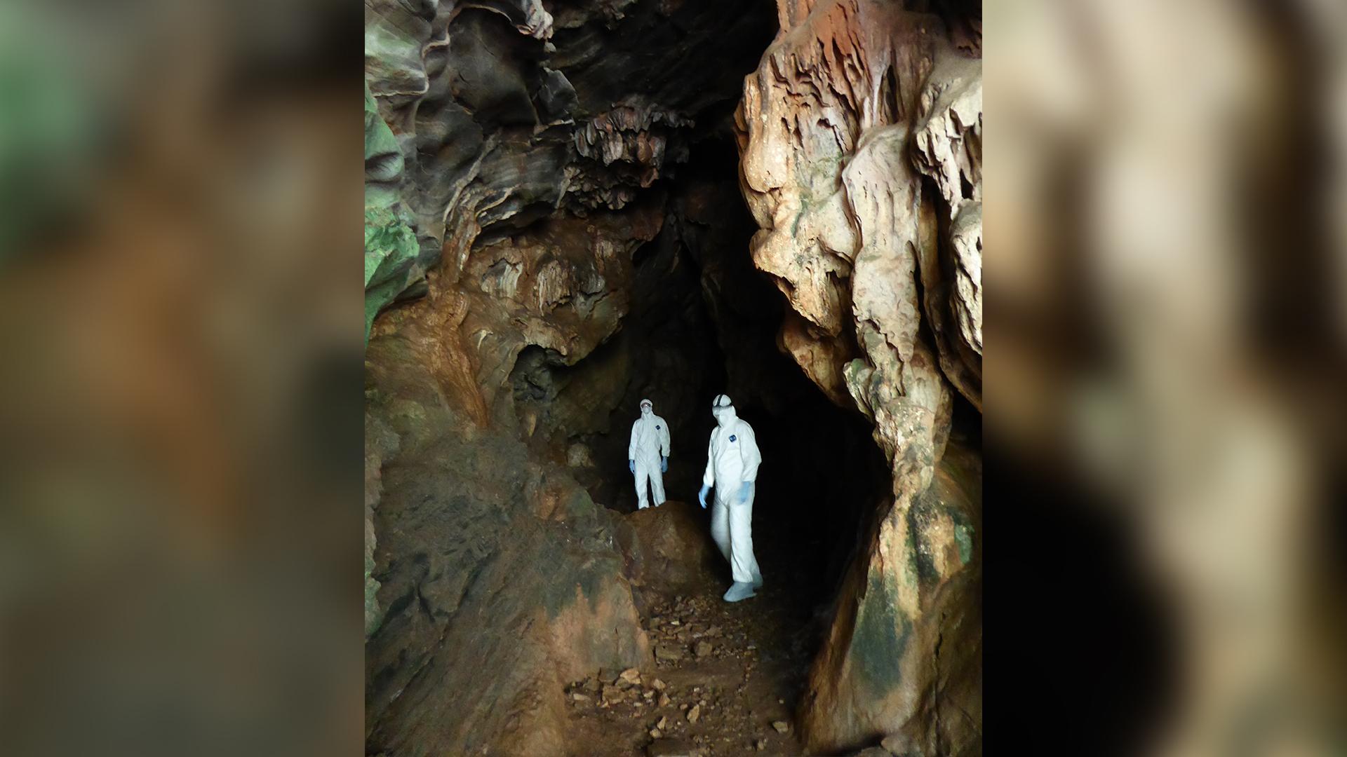 Ciientistas da EcoHealth Alliance em caverna