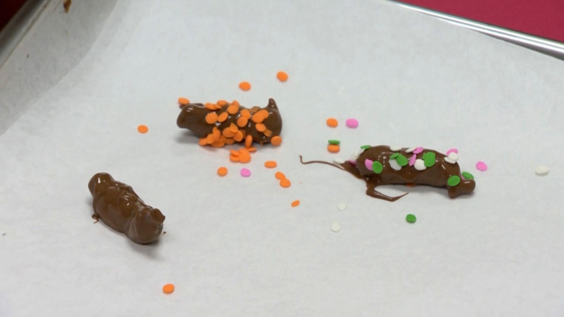 Cigarras cobertas por chocolate são vendidas em doceria nos Estados Unidos