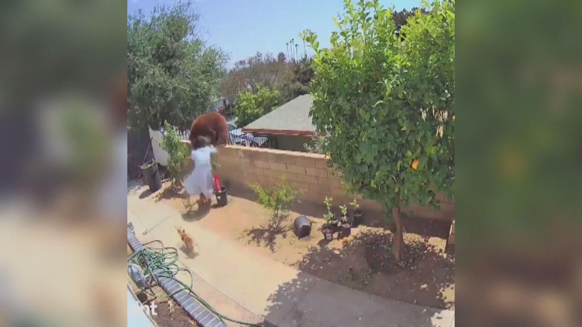 Adolescente empurrou ursa de muro nos EUA para salvar cão