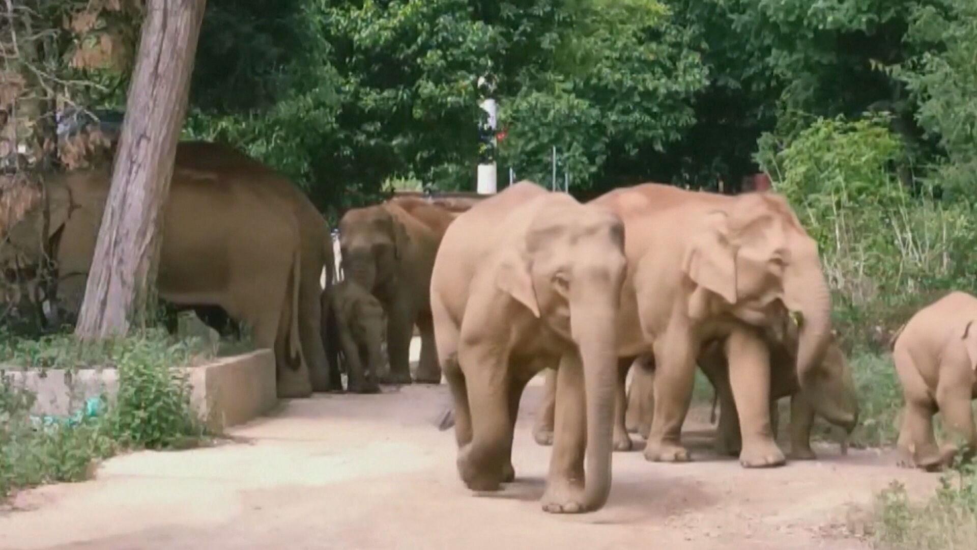 Viagem de elefantes vira atração na China (12.Jun.2021)