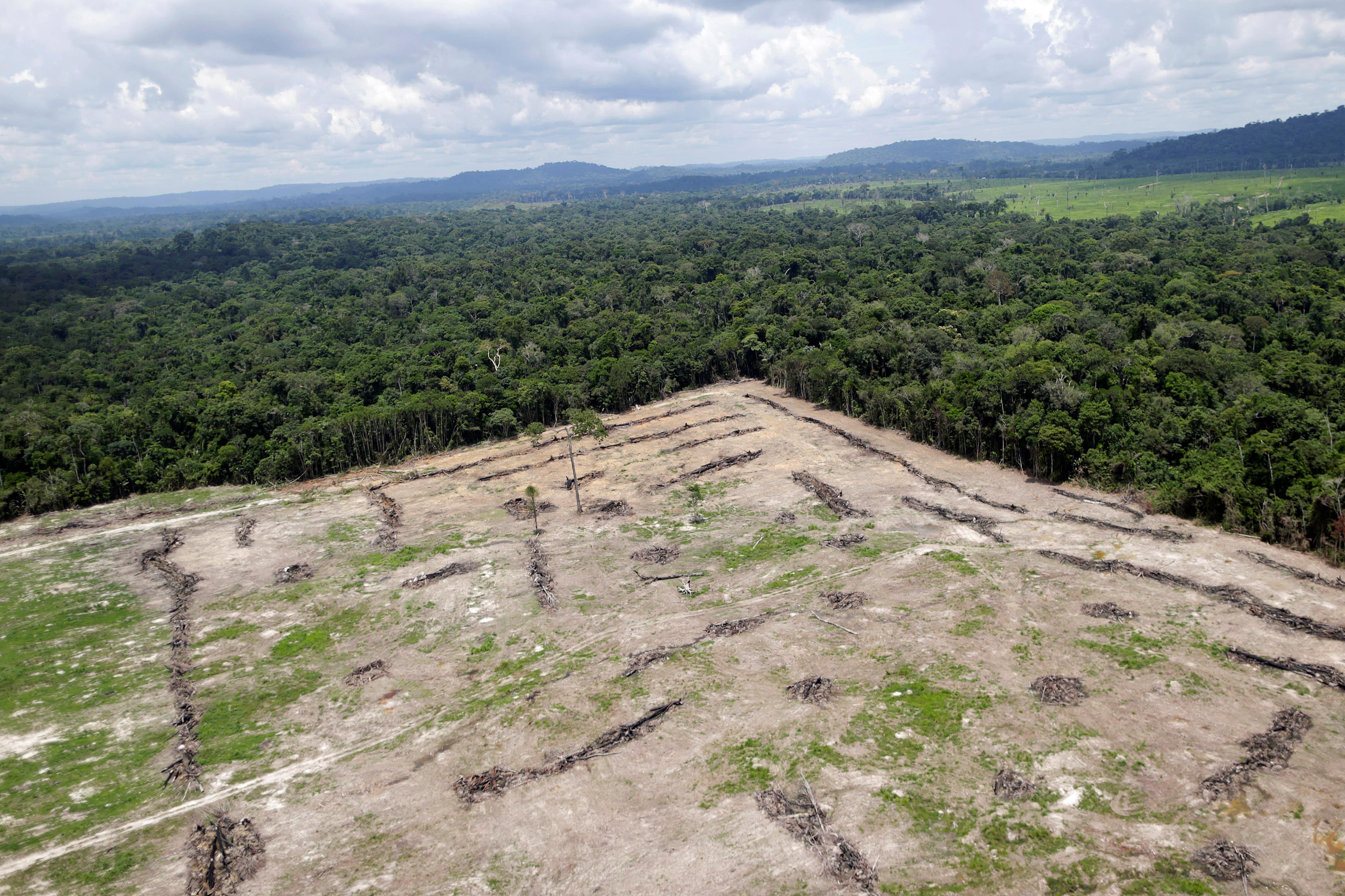 Desmatamento, Amazônia