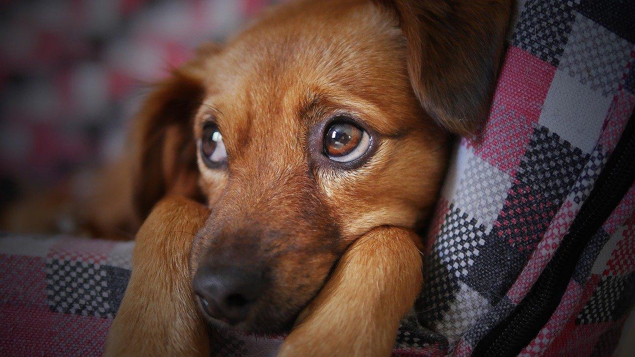 Cachorro é fotografado em cama para animais de estimação