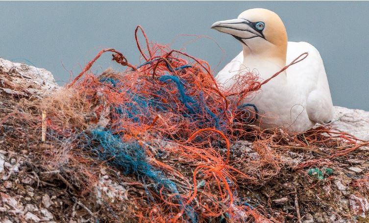 A quantidade de resíduo plástico produzido anualmente vem aumentando rapidamente desde 1950