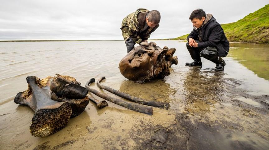 Especialistas examinam esqueleto de mamute encontrado em lago no Ártico