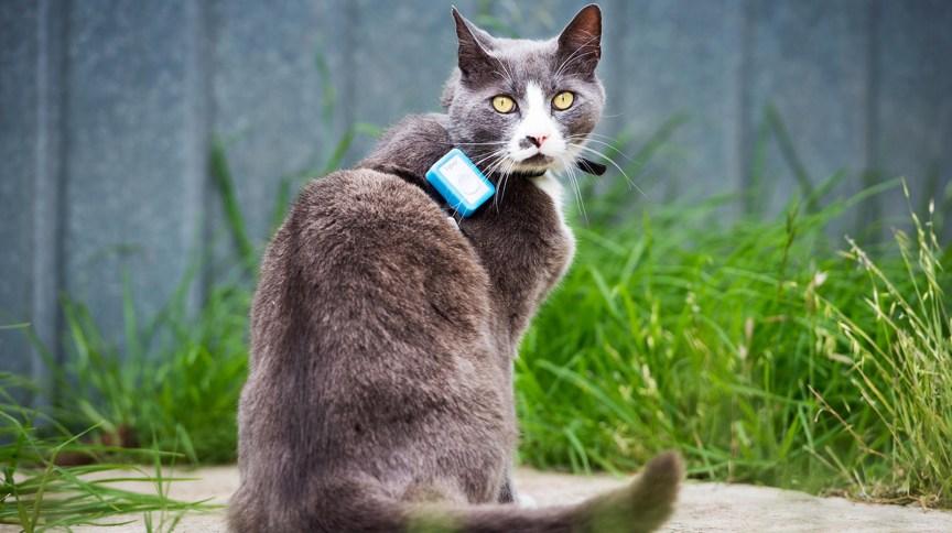Gato que participou de pesquisa sobre ataques à vida selvagem
