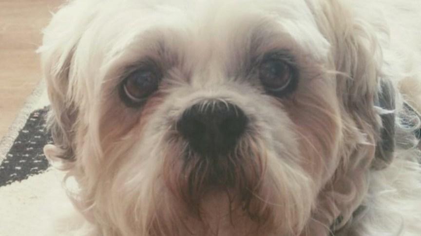 Cãozinho Boss teve a mandíbula quebrada em Pet Shop