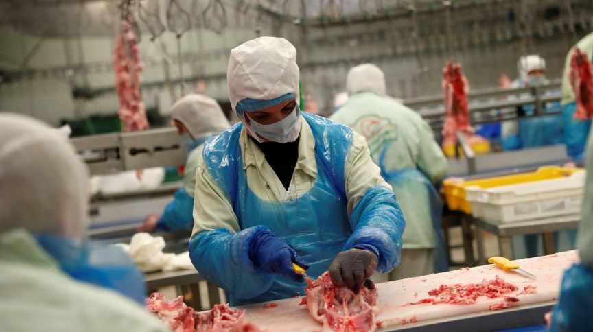 Corte de frangos em frigorífico: o Brasil é o maior exportador do mundo dessa proteína animal