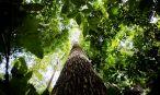 Amazônia quer discutir desenvolvimento sustentável, diz governador do Pará