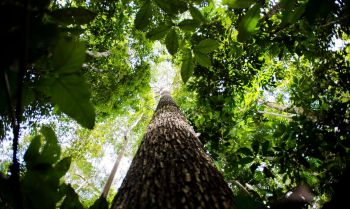 Barbalho também comentou a importância de encontrar soluções para que o Brasil receba investimentos pela preservação da floresta