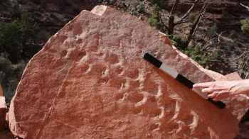 """""""Estas são, de longe, as mais antigas trilhas de vertebrados do Grand Canyon, que é conhecido por suas abundantes trilhas de fósseis"""", disse um paleontólogo"""