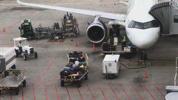 Pista do Aeroporto do Recife ficou interditada por 11 minutos para que animal fosse removido do local