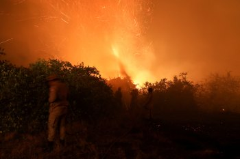No Pantanal, este já é o pior ano desde que o Instituto Nacional de Pesquisas Espaciais começou a registrar os focos ativos de fogo, em 1998