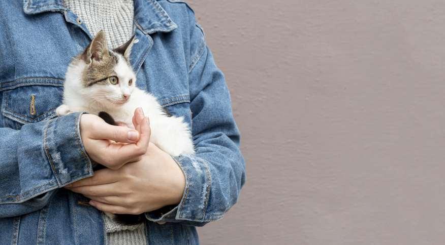 Os gatos e seus donos podem ser muito próximos