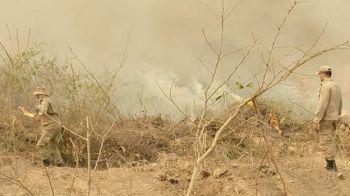 Nordeste também teve mais incêndios do que a média; já as regiões Norte, Centro-Oeste e Sul registraram índices menores