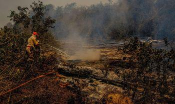 O ano de 2020 é o pior para o bioma na história do acompanhamento dos incêndios na região