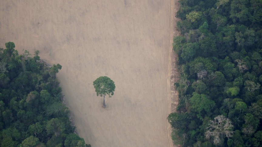 Vista de área desmatada na floresta amazônica perto de Porto Velho (RR)
