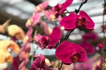 Cultivo de flores e plantas ajudam a aliviar ansiedade e depressão na pandemia; descubra quais podem ser criadas em casa sem perigo para crianças e animais