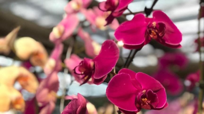 Flor orquídea em floricultura do Rio de Janeiro no primeiro dia da primavera